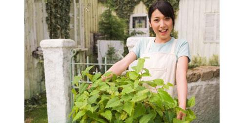 観葉植物資格ランキング